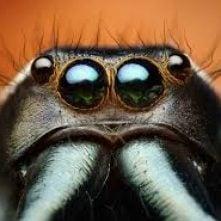 spider_head