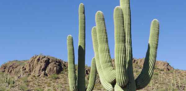 How to Install Cacti 1.1.10 on...
